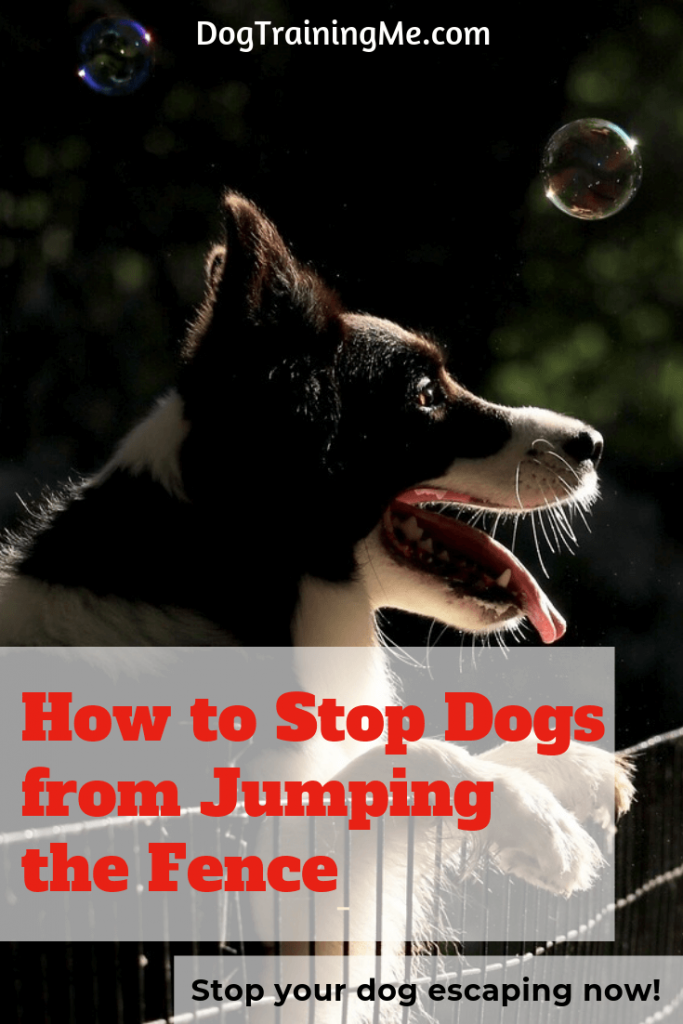 how to stop dogs jumping the fence