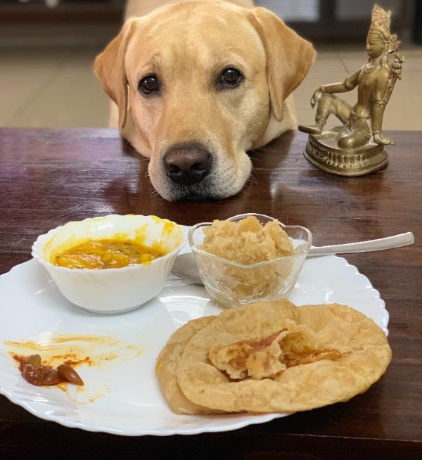 dogs eat pita