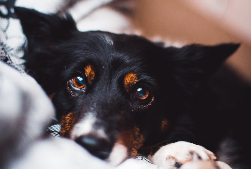anesthesia effects in dogs