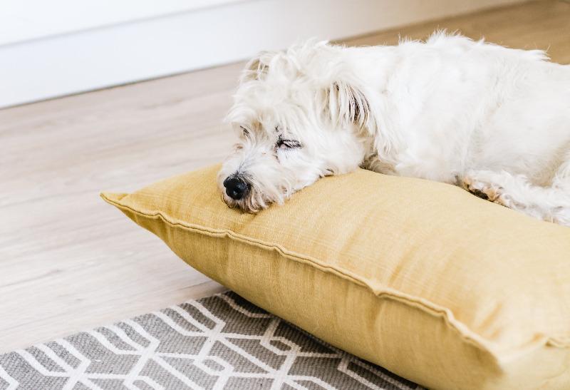 dog aggressive when tired