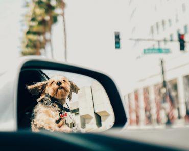 dog stare in the mirror