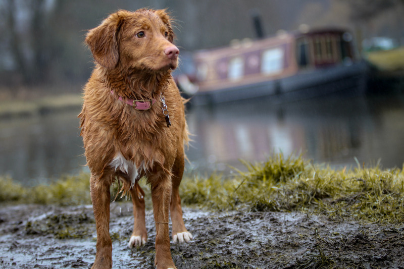 dog out in the rain