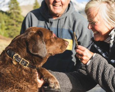dog breed for elderly