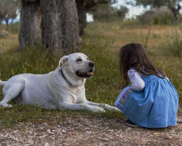 guard dogs for families and children