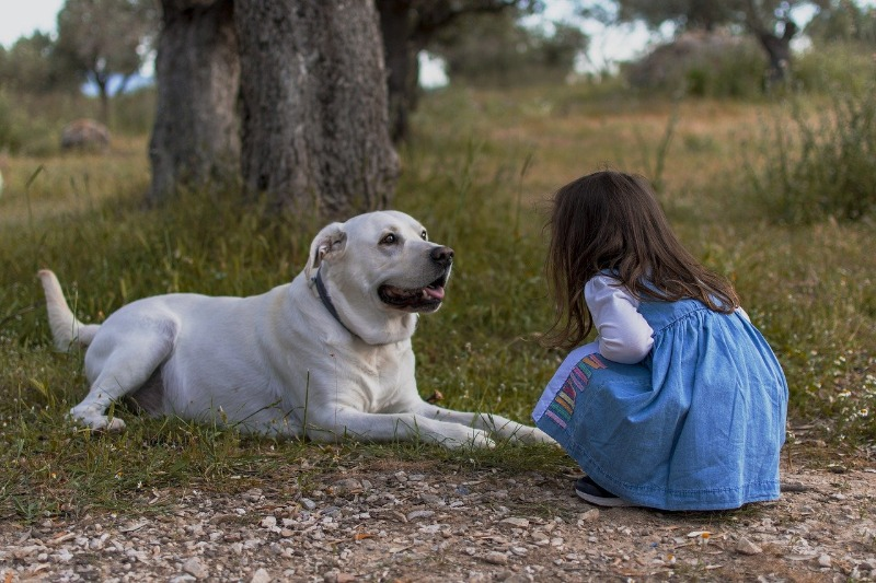 guard dogs for families & children