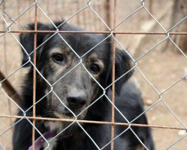 return dog to shelter