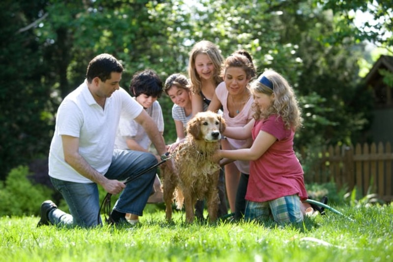 best family protection dog