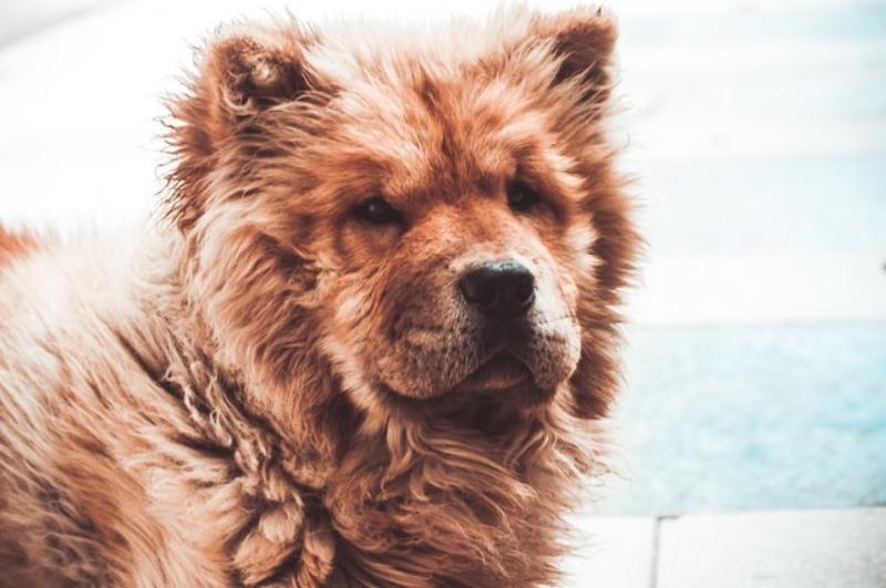 dog breeds alone