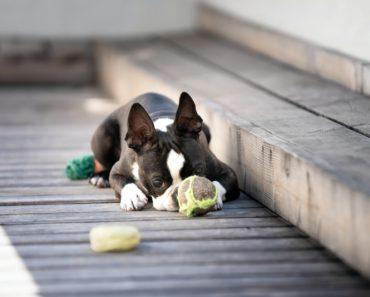 least destructive dog