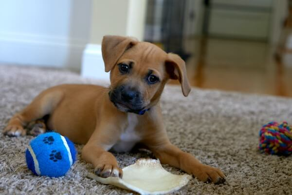 8 week old puppy toys