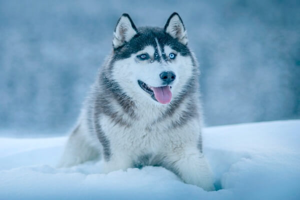 Dog breed for hot and cold weather