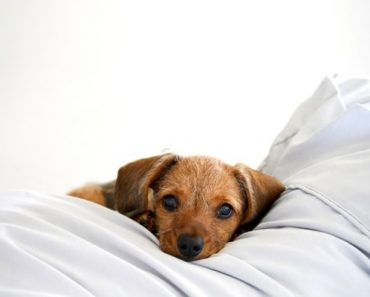 Dog is sleeping in your bed