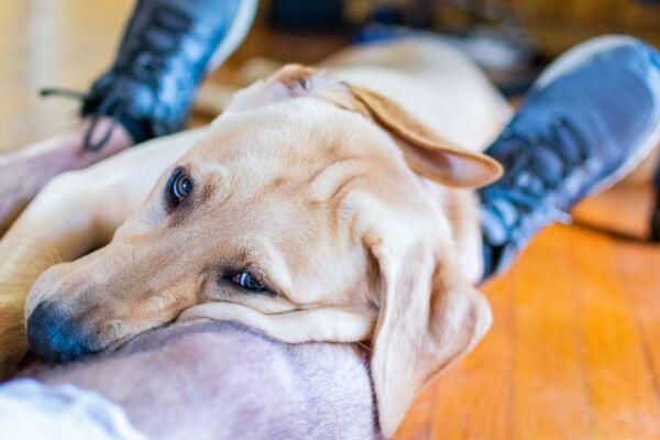 Dog sitting on your feet