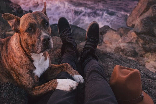 Dogs lays on your feet