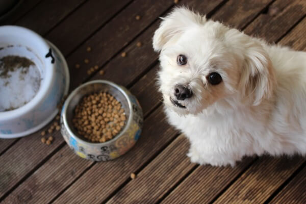 How long can a dog live with no food