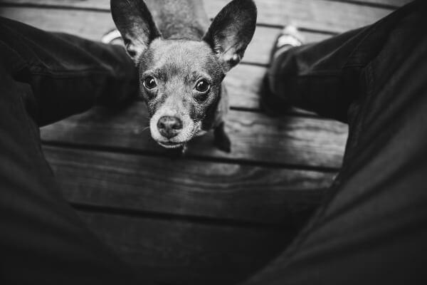 Stop dog going between your legs