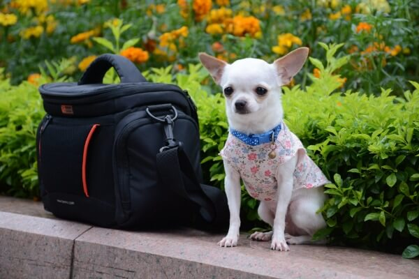 Travel cross country with a dog
