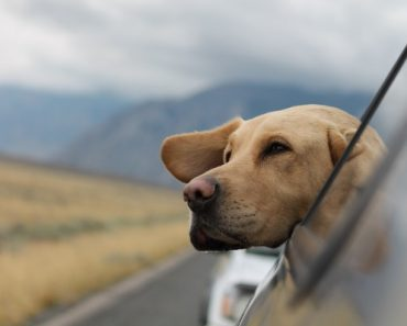 Travel with a dog cross country