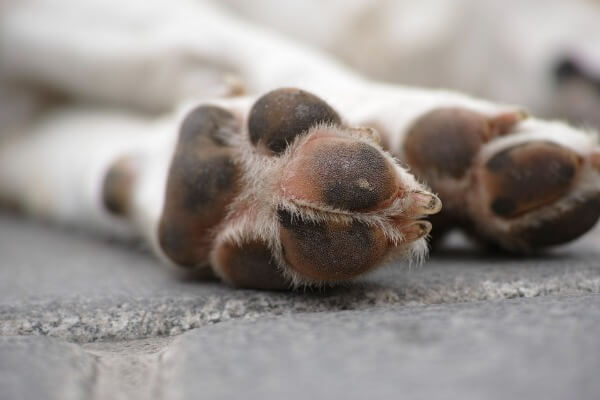 Why a dog crosses its paws