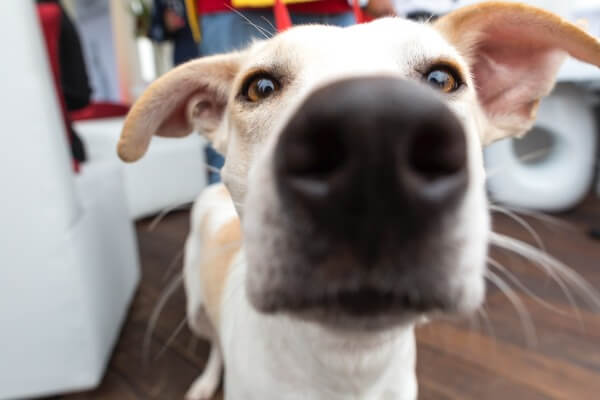 A dogs sense of smell