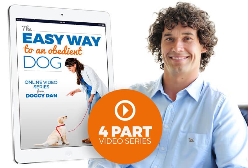 Dog training free video series
