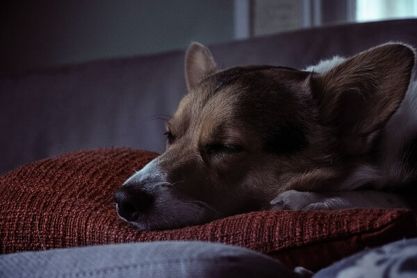 Dogs sleeping in the dark