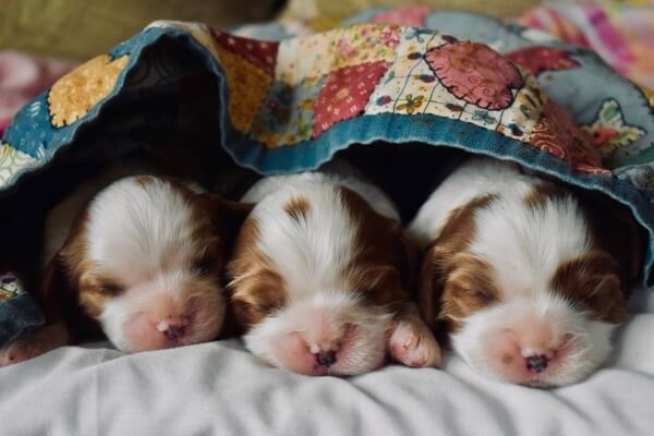 Puppies need a blanket at night