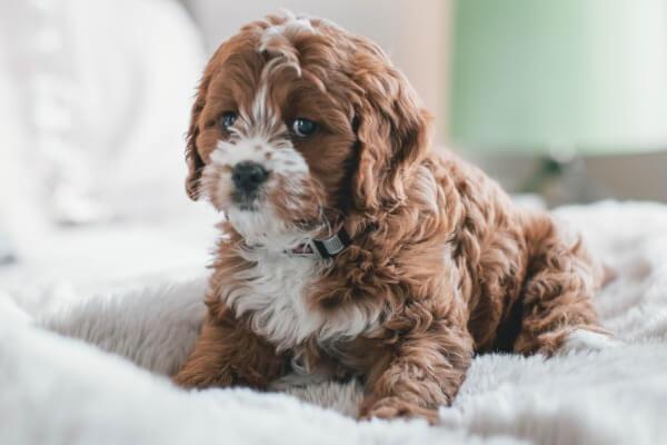 Puppies need blankets