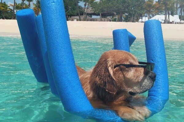 Swimming is good for dogs